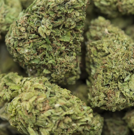 Detailed closeup of dried and cured medical marijuana, produced legally in California.