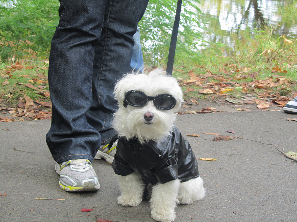 Canine Promenade