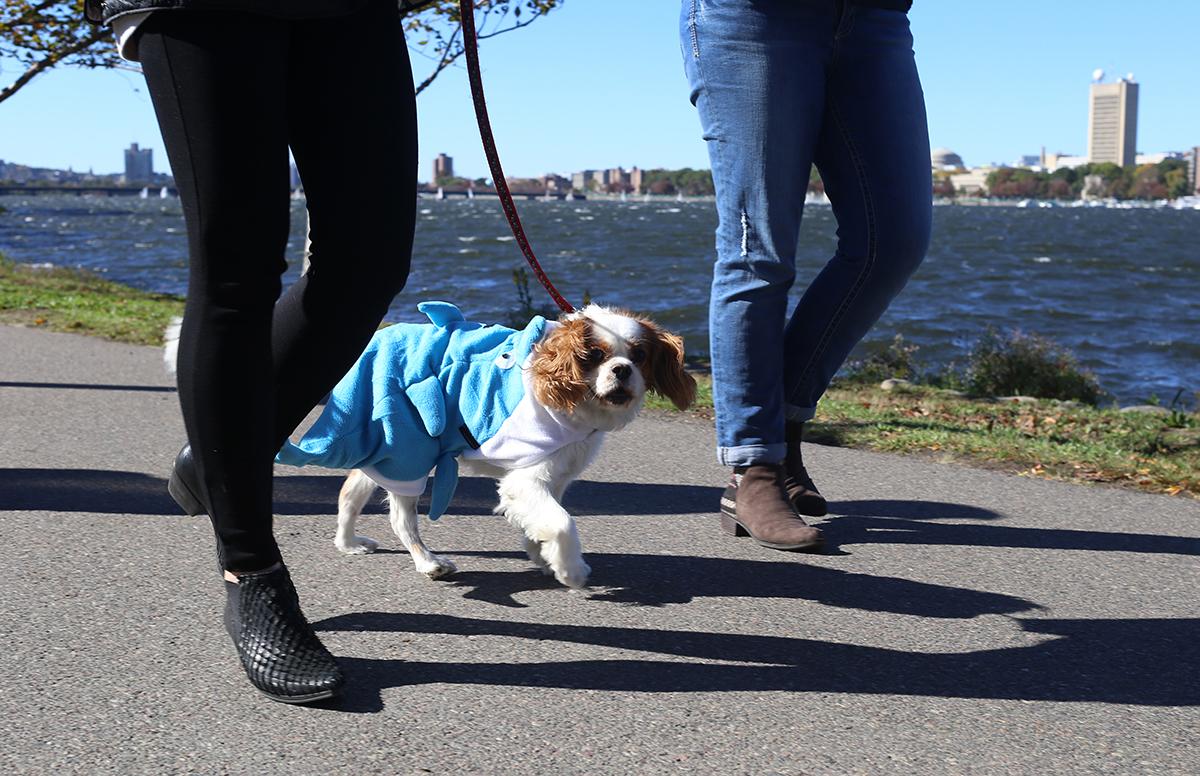 canine promenade 2016