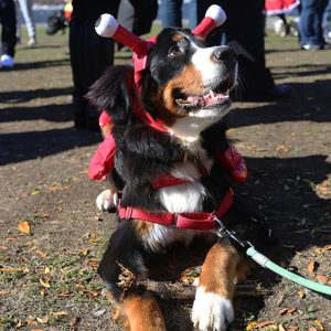 canine-promenade-2016-sq
