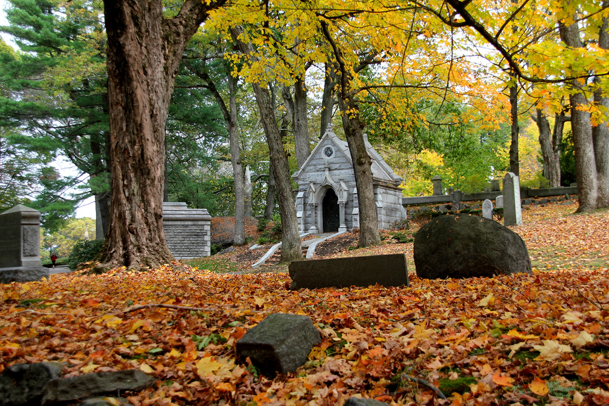 cemetery in the forest - photo #12