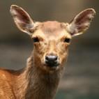 deer sq