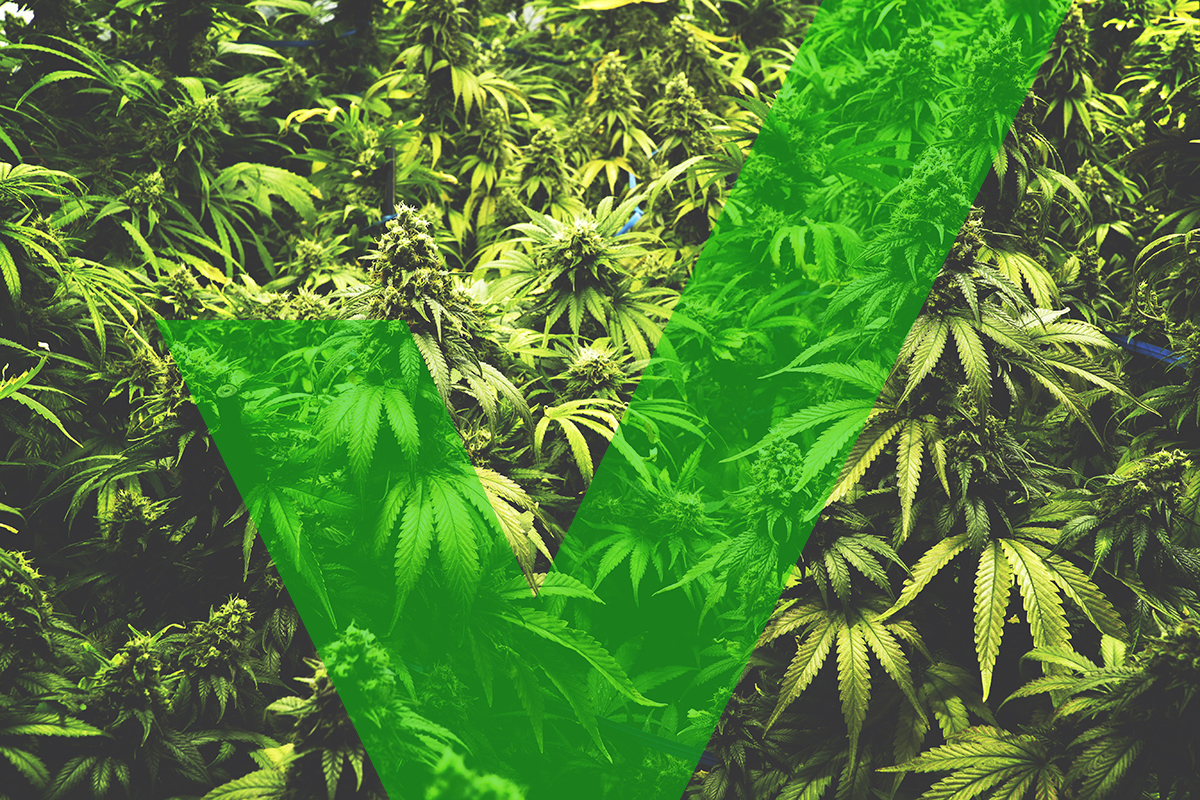 legalizing recreational marijuana Many states in america have now moved to allow for recreational  the move to legalize marijuana first gained an  the pros of legalizing weed most.
