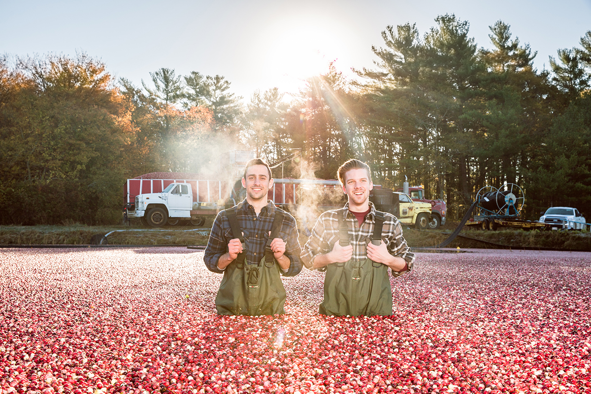 Michael Kurson (L) and Neil Quigley harvesting cranberries for Boston Cranberry