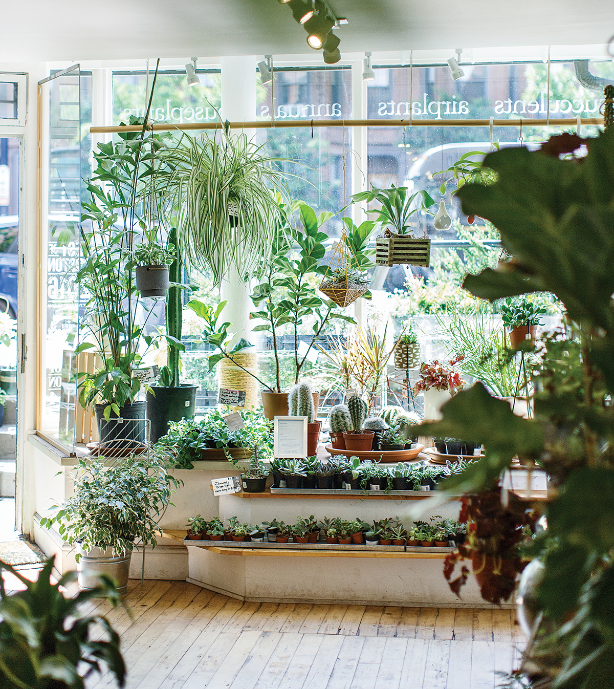 best of boston home 2017 7 niche urban garden supply