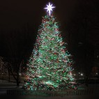 boston common christmas tree sq