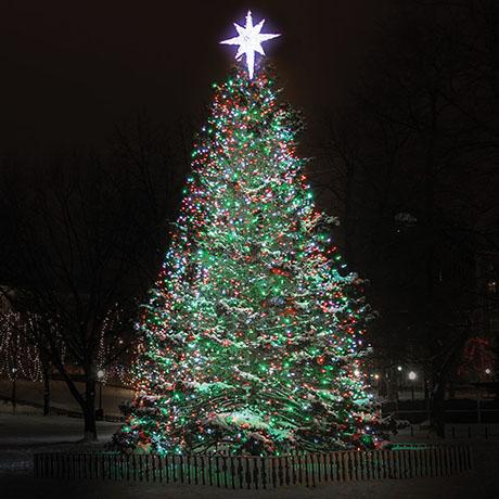 boston common christmas tree sq