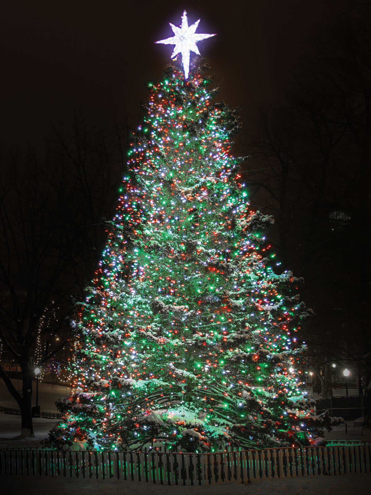 The Boston Common Christmas Tree, By the Numbers