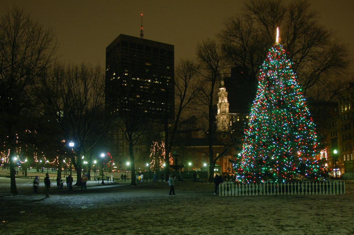 boston common tree 1