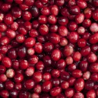 TILEABLE Seamless Red Cranberry Fruit Background