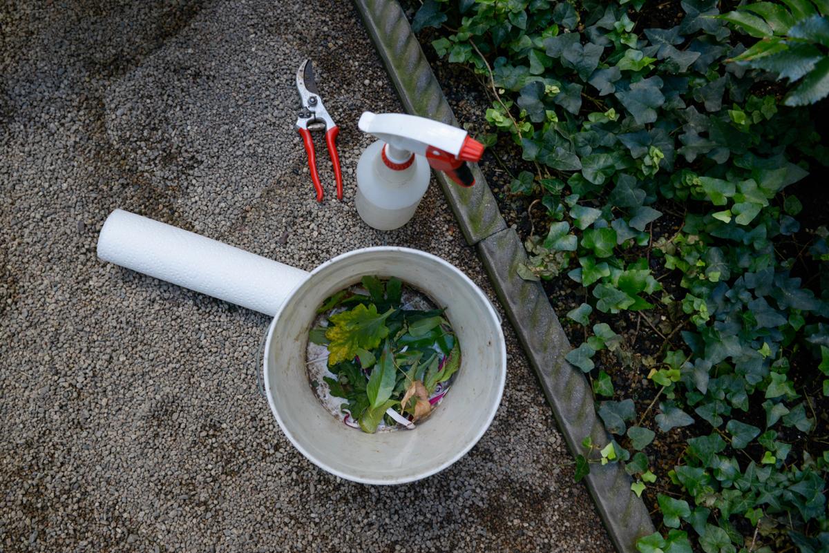 isabella stewart gardner museum horticulture 5