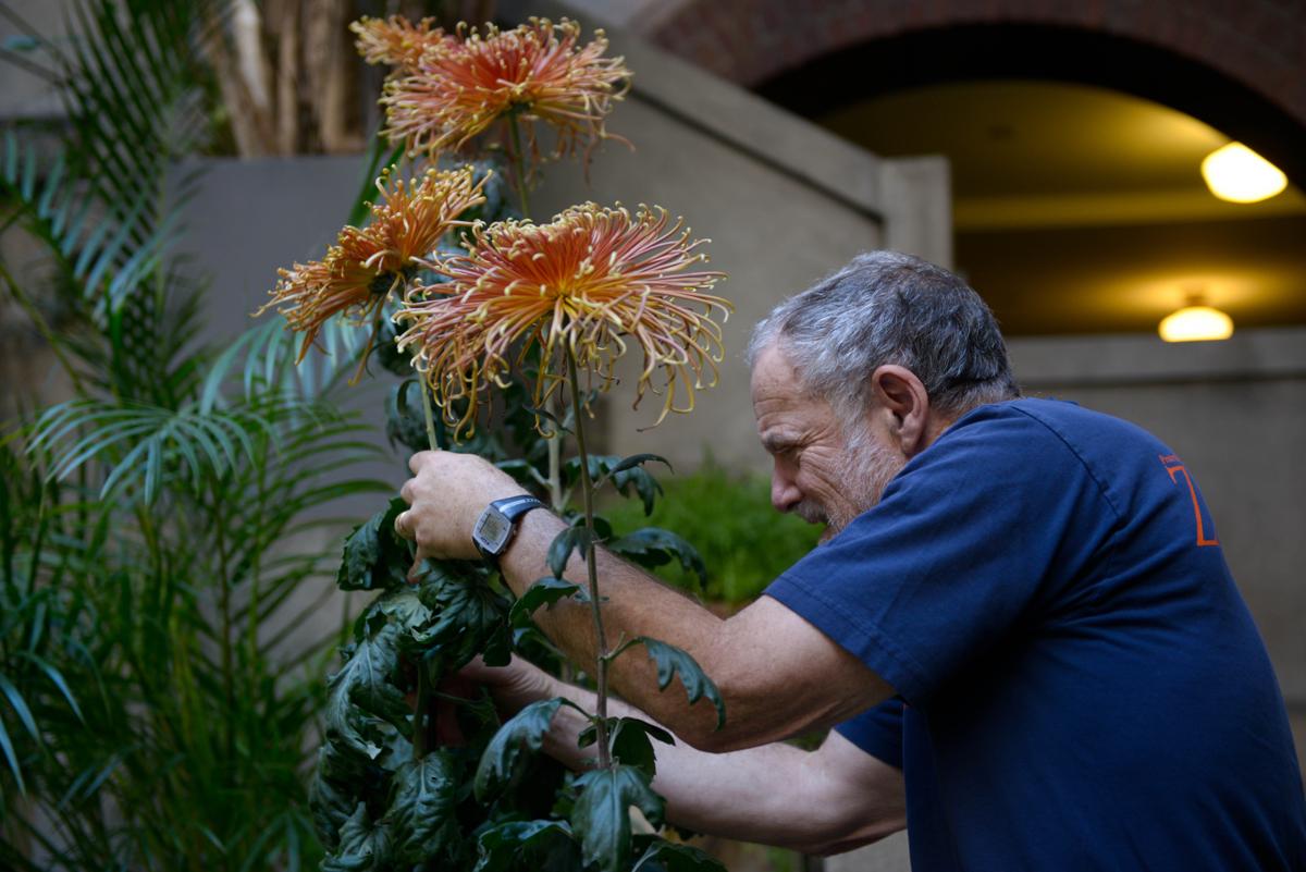 isabella stewart gardner museum horticulture 8 jim wieder volunteer