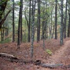 Rocky Woods