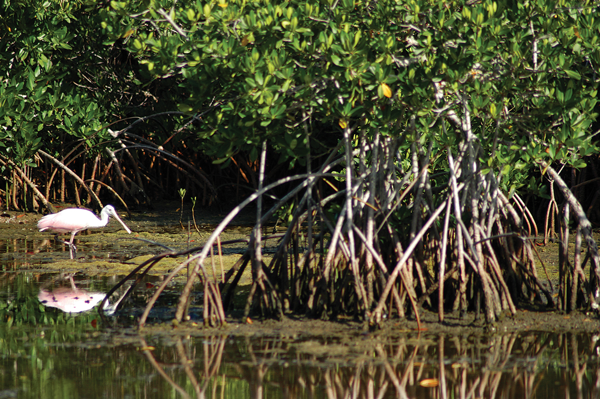 sanibel captiva islands florida 2