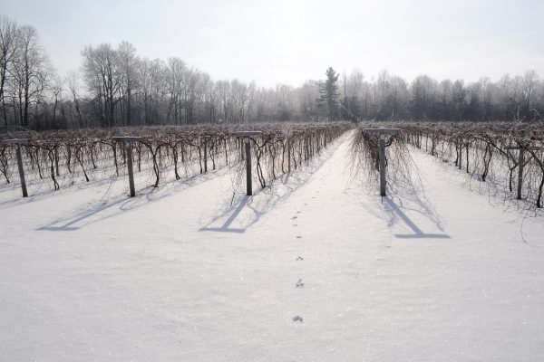 Lincoln Peak Vineyard snow sparkle 3000