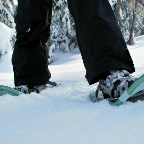 snowshoesq