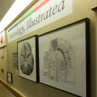 "Gallery opening of ""Neurology, Illustrated"" at the Department of Neurology on the 12th floor of the Biewend Building at the Tufts Medical Center on March 2, 2017.   Photo by Matthew Healey for Tufts Medical Center"