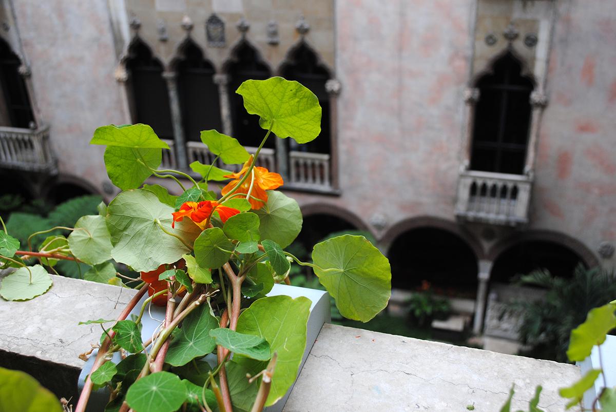 nasturtiums gardner museum