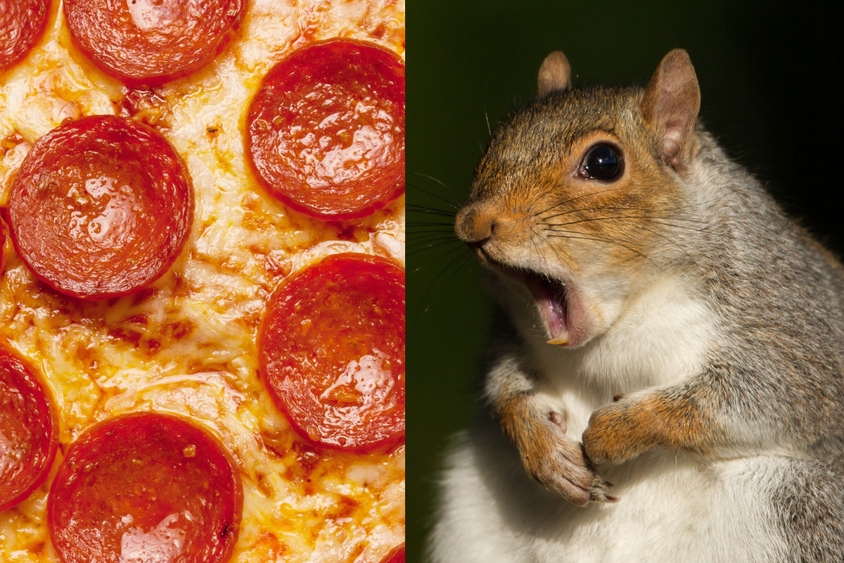 Pizza photo via iStock/vm2002, Squirrel photo via iStock/Dgwildlife