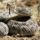 Rattlesnake 3
