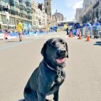 boston marathon dog sq