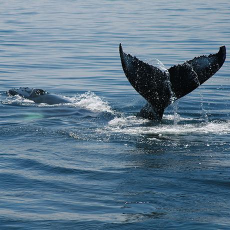 boston-whale-watching-sq