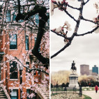 pink-trees-boston-sq copy