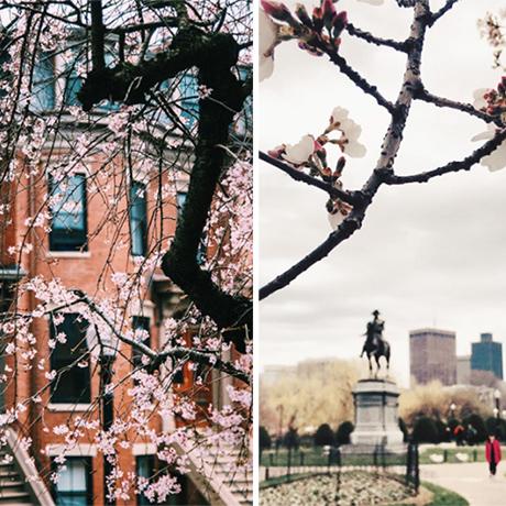 pink-trees-boston-sq copy