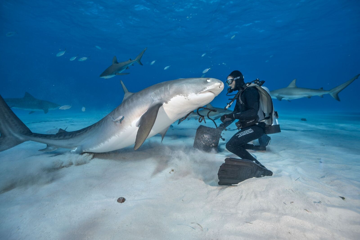 brian skerry shark photographer wants us to stop ruining the ocean