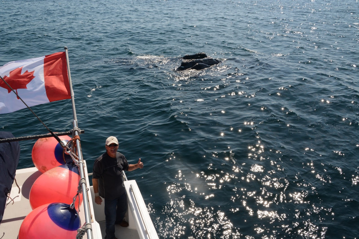 Death By Whale: Canadian Man Killed By the Animal He Saved