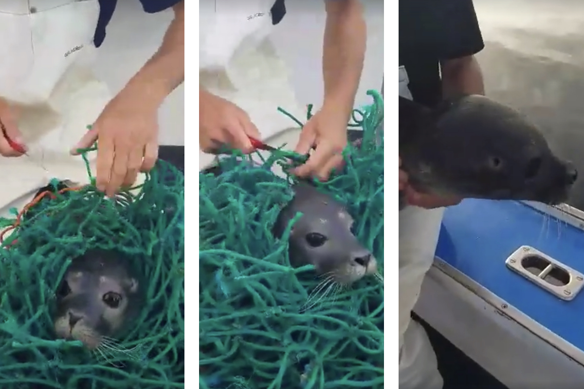 Lobstermen get online attention for saving trapped seal pup