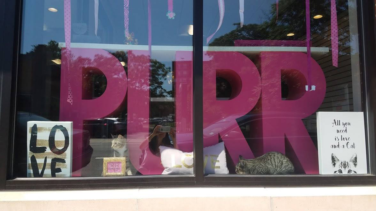 Purr Cat Cafe is almost ready to open in Brighton