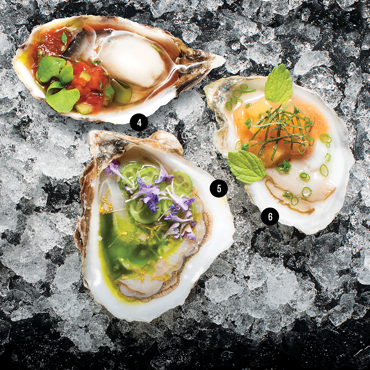 composed oysters boston