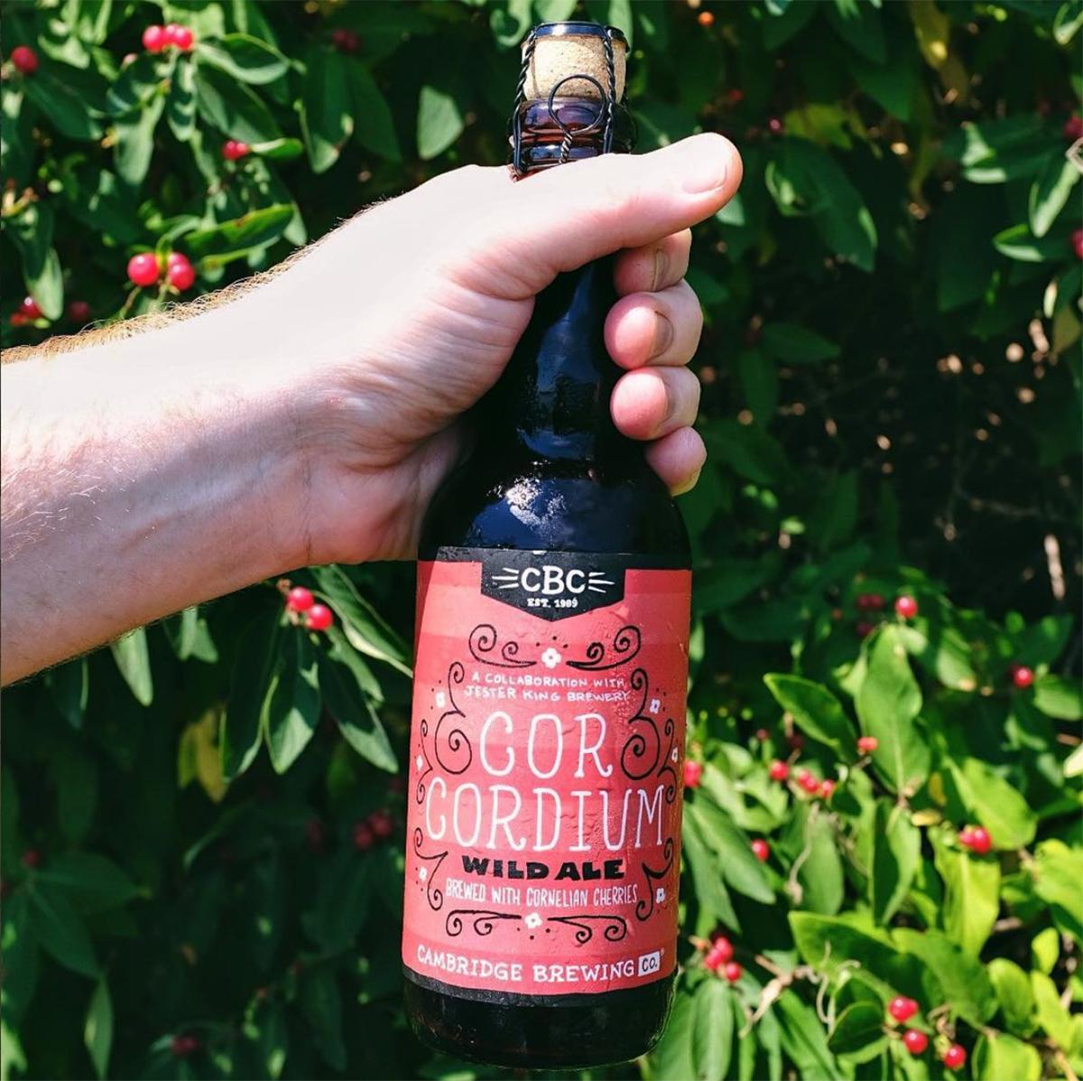 Cambridge Brewing Company / Jester King Cor Cordium wild ale won a bronze medal at GABF in 2017