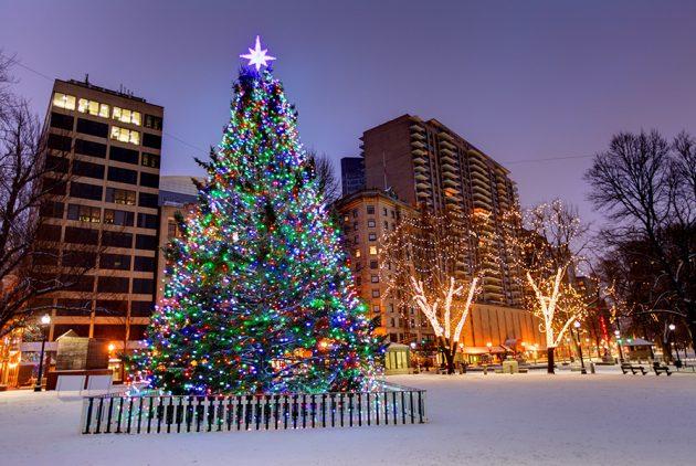 Nova Scotia Selects Christmas Tree for Boston Common