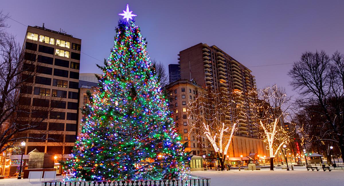 nova scotia selects annual christmas tree to send to boston - 14 Foot Christmas Tree