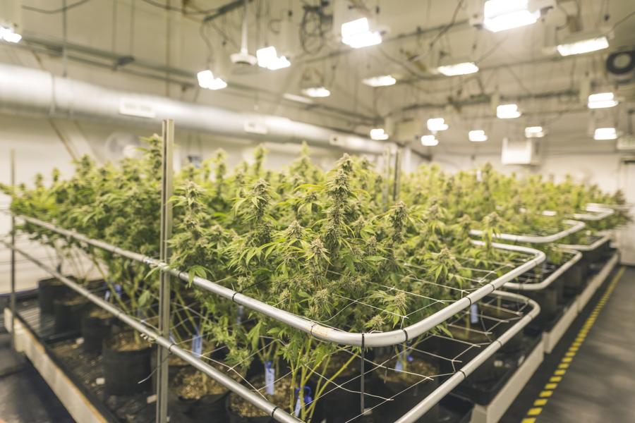 Five boston university marijuana businesses have big for Indoor gardening rainier oregon