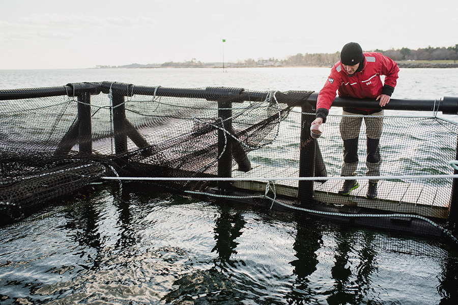 Steelhead trout farm project manager Gunnar Ek tosses the fish a cup of their feed