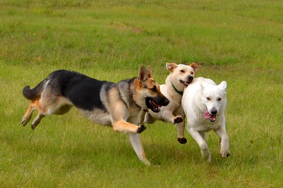Image result for dogs at a dog park
