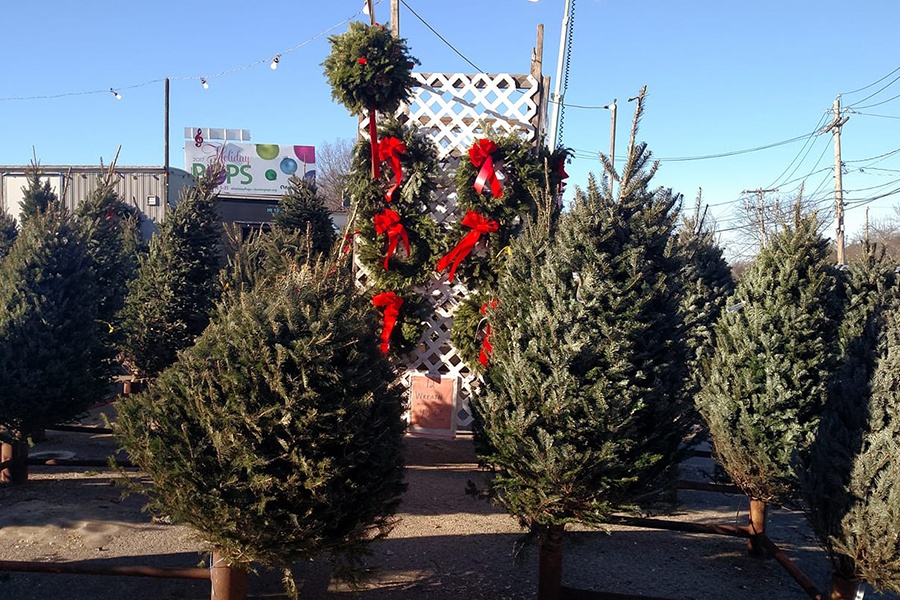 Cut Your Own Christmas Tree Near Me.Where To Buy Or Cut Your Own Christmas Trees In Boston