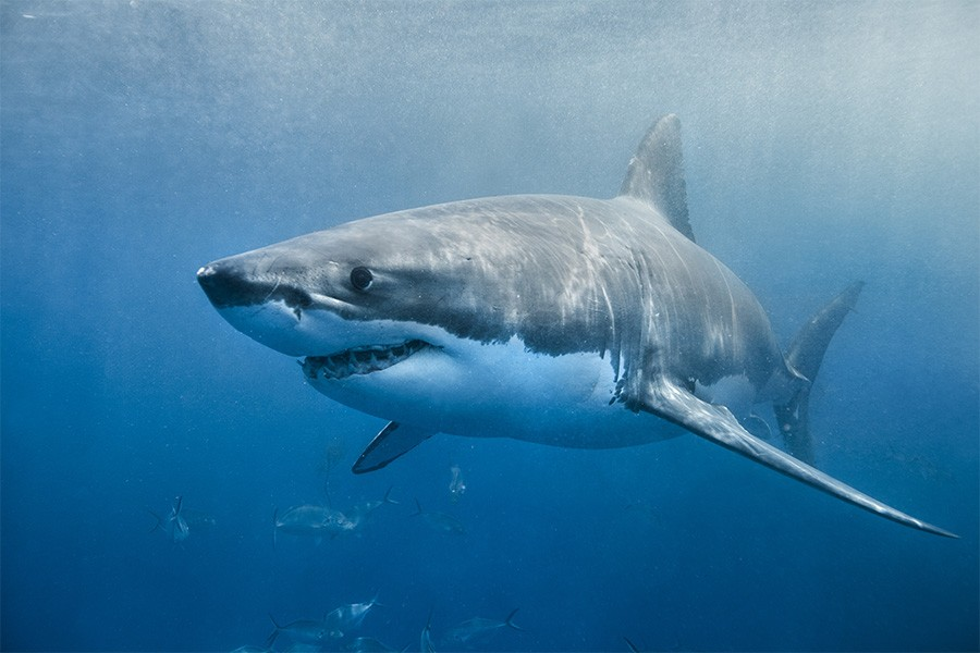A Great White Shark Was Spotted off the Coast of Connecticut